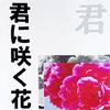 君に咲く花、僕の花